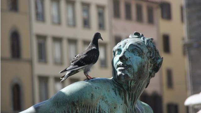 Disminuir Poblacion de palomas elevadas