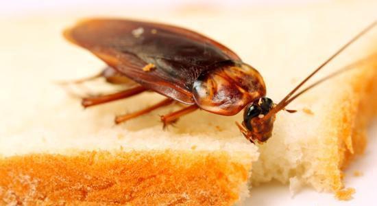 Detectar cucarachas en casa
