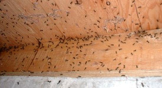Cryptosan. Empresa especializada en el control de plagas de hormigas. Eliminar hormigas de casa, acabar con las hormigas. Fumigar Hormigas