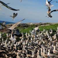 aves_urbanas_gaviotas_2_200x200