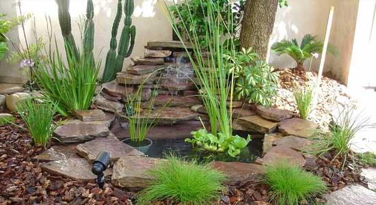 Eliminar Mosquitos del Jardin