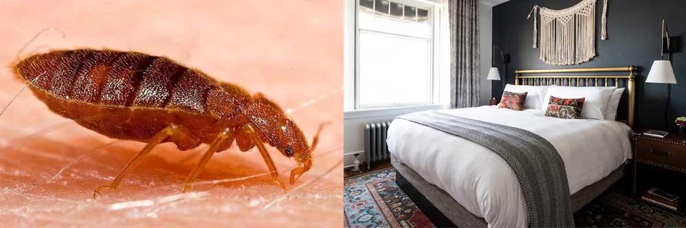 Eliminar Chinches de la cama